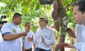 Cacaoteros de Norte de Santander le dijeron al Presidente Santos que en el posconflicto el desarrollo de este cultivo permitirá sustituir al menos el 40 por ciento de los cultivos de coca en el Catatumbo.